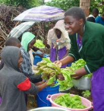 """Seeds from SHARE provides for """"SHARE in Africa"""" schools and families in order to better education and life"""